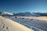 alpedhuez-salino-hiver-traineaux-143134